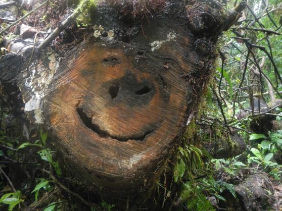 Smiling tree!